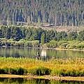 Fishing At George Town Lake by Image Takers Photography LLC - Laura Morgan
