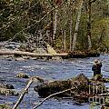 Fishing In Pacific Northwest by Darleen Stry