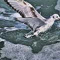 Fishing In The Foam by Deborah Benoit
