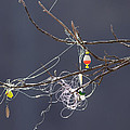 Fishing Line Sculpture by Melinda Fawver