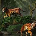 Fishing Tigers by Daniel Eskridge