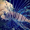 Fishy by Aaron Swenson