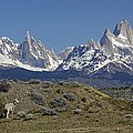 Fitz Roy Range In Springtime 2 by Michele Burgess