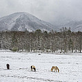 Five Horses During Smoky Mountain Snowfall E92 by Wendell Franks