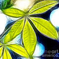Five Leaves. by Dipali S