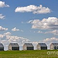 Five Sheds On The Alberta Prairie by Louise Heusinkveld