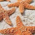 Five Starfish by Carol McGunagle