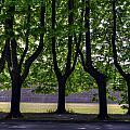 Five Trees by Matt Swinden