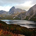 Fjordland Autumn by David Broome