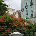 Flamboyan In Park by George D Gordon III