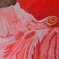 Flamboyant, Flamingo   by Sandra Reeves