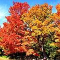 Flamboyant Autumn by Cristina Stefan