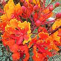 Flamboyant Desert Flowers by Tahlula Arts