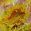 Flame Flower by Nancy Olivia Hoffmann