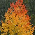 Flame On by Ernie Echols