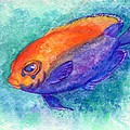 Flameback Angelfish by Ashley Kujan