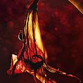Flamenco by Jaroslaw Blaminsky
