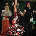 Flamenco Series No 13 by Mary Machare