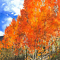 Flaming Aspens by Barbara Jewell