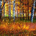 Flaming Grass by Jenny Rainbow