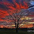 Flaming Oak Sunrise by Reid Callaway