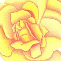 Flaming Yellow Rose by Dusty Reed