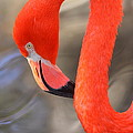 Flamingo Curves by Bruce J Robinson