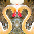 Flamingo Double Vision #1 by Evan Peller