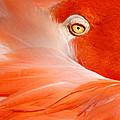 Flamingo Eye by Don Johnson
