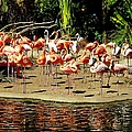 Flamingo Family Reunion by Karen Wiles