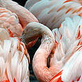 Flamingo by Glenn McGloughlin
