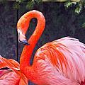 Flamingo In The Wild by Jonny D