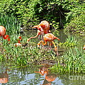 Flamingo Island by Rick  Monyahan