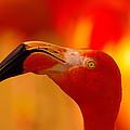 Flamingo  by Jeff Swan