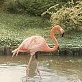 Flamingo by Jeffery L Bowers