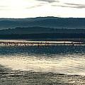 Flamingo Lake by Marc Levine