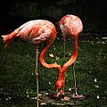 Flamingo Mirrored by Mary Machare