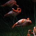 Flamingo Morning by Greg Patzer