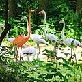 Flamingo by Oleg Zavarzin