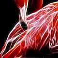 Flamingo Portrait Fractal by Pati Photography