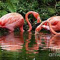 Flamingo Twist by Photos By  Cassandra