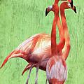 Flamingo Twist by Jeff Kolker
