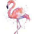 Flamingo Watercolor by Olga Shvartsur