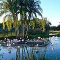 Flamingo Watering Hole by Denise Mazzocco