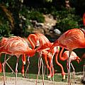 Flamingos by Aimee L Maher ALM GALLERY