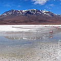 Flamingos At The Altiplano In A Salt Lake by IPics Photography