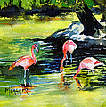Flamingos At The St Louis Zoo by Spencer Meagher