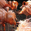 Flamingos by Beth Vincent