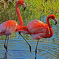 Flamingos by Dragan Kudjerski