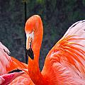 Flamingos by Jonny D